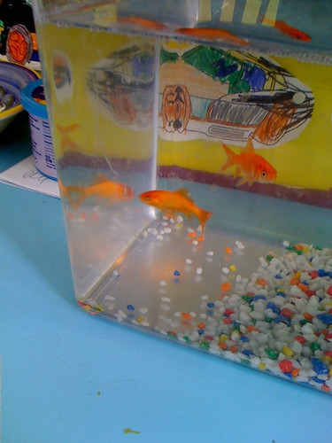 cool goldfish tank. gold fish tank