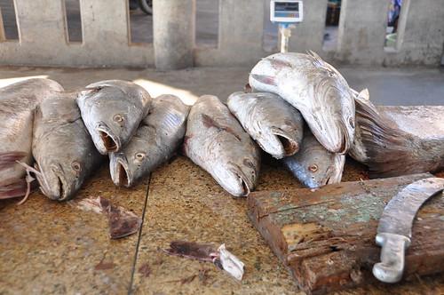 Nouakchott fish market