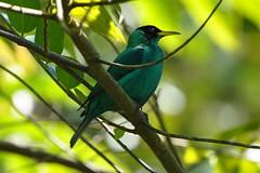 Trujillo, Honduras, le parc national Capiro-Calentura