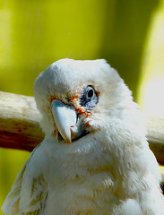 . . . ( ) Tags: birds parrot mohammed