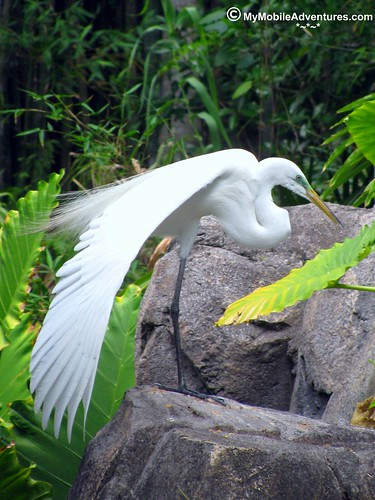 IMG_1270-WDW-DAK-egret