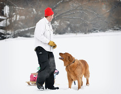 (MelissaReed) Tags: goldenretriever fontana wi frozenlake