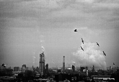 Kali Yuga (ilConte) Tags: sky industry birds smoke uccelli cielo pollution industria chimneys fumo ciminiere inquinamento