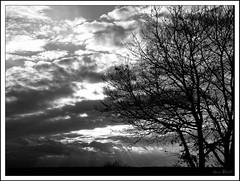 Vibrance (Agnès Willette (noushka7)) Tags: nature soleil noiretblanc ciel arbres contraste nuages paysage contrejour gers sudouest midipyrénées blueribbonwinner rayonnement panasonicfz28