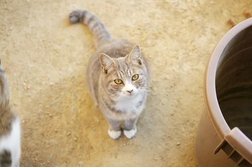 Today's Cat@2010-02-22
