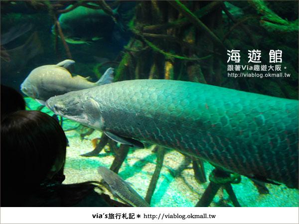 【via關西冬遊記】世界最大極的水族館~大阪海遊館11
