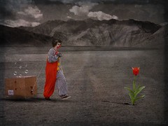 flowering the desert (Eddi van W.) Tags: light red texture love creativity energy colours clown digitalart gimp textures tulip creativecommons spirituality deepness kreativitt eddi07 graphicmaster artuniinternational
