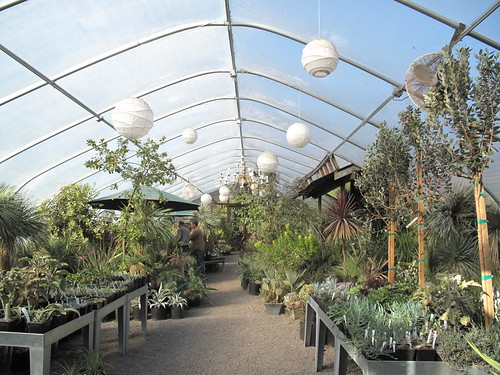 Cistus nursery greenhouse