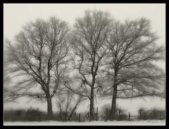 785 Trees