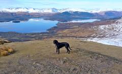 Milly (Ian D) Tags: walking scotland lochlomond conichill