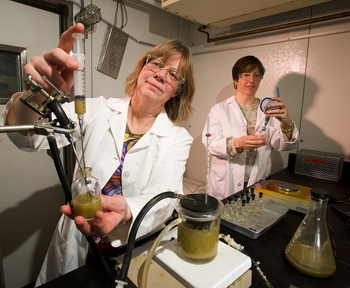 ARS technicians Christine Odt (left) and Kim Darling dispense rumen fluid into sample vials containing biomass materials during a test to assess the potential of these materials as feedstocks for biofuels production.