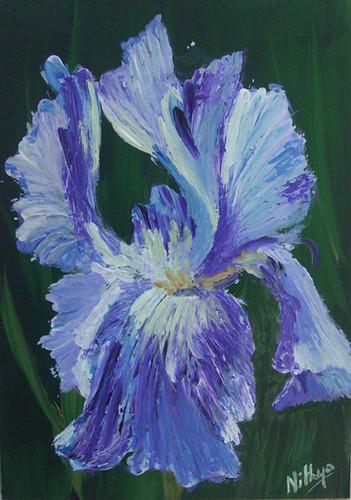 Iris #23