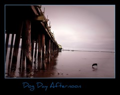 Dog Day Afternoon (janetfo747 Year of the Horse!) Tags: dog pier surf pacific billy halfmoonbay dogdayafternoon platinumphoto anawesomeshot theunforgettablepictures mygearandme mygearandmepremium mygearandmebronze mygearandmesilver mygearandmegold mygearandmeplatinum mygearandmediamond tplringexcellence artistoftheyearlevel7