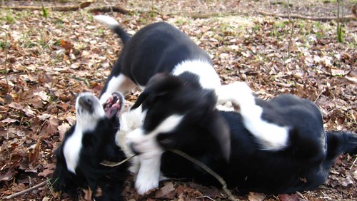 Holly and Yarrow scrapping