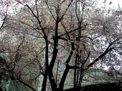 大阪駅前第3ビルの並木