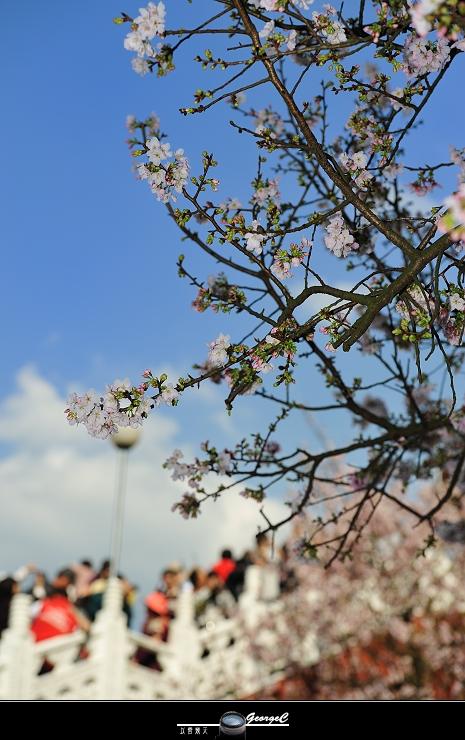 Sakura sunny 09