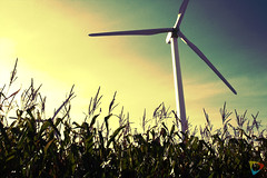 Two Farms (Sean Voigts) Tags: sky mill windmill corn energy wind farm clean
