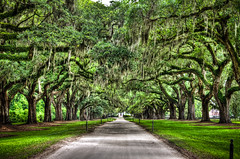 Boone Hall Avenue of Oaks (Kay Gaensler) Tags: usa tree green sc oak alley southcarolina plantation spanishmoss 2009 hdr frhling allee boonehall