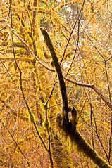 Mother's Nature's Middle Finger (kmanohar) Tags: california northerncalifornia middlefinger worldheritagesite humboldtcounty redwoodnationalpark upyours flippingthebird flippinthebird northerncaliforniacoast temperaterainforest prairiecreekstatepark prairiecreek redwoodpark prairiecreekredwoods redwoodcoast humboldtcountyca humboldtcountycalifornia prairiecreekredwoodsstatepark redwoodsstatepark pacificrainforest klamathcalifornia prairiecreekpark internationalbiospherereserve redwoodpreserve californiarainforest northwestrainforest redwoodreserve