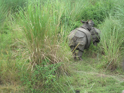 One-horned rhinos spotted in Chitwan, Nepal