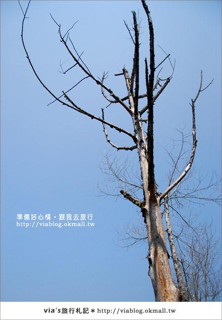 【梅峰農場】不止桃花美!梅峰農場賞花趣~(下)35