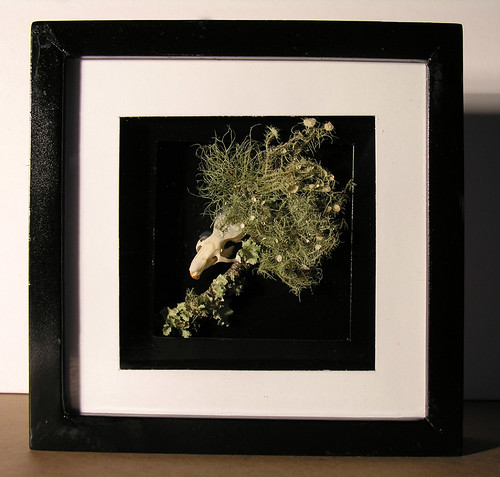 Upcycled Memento Mori Shadow Box 1 - Real Rat Skull, Fungi, and Moss