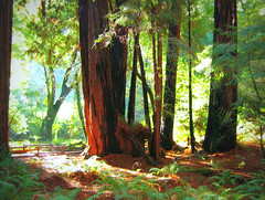 The Magic of Muir Woods (Colorado Sands) Tags: california trees usa nature america forest us woods arboles unitedstates trail coastal muirwoods american marincounty redwoods amerika redwoodtrees westcoast bume pathway rvores kalifornien bosco californie oldgrowth pokok muirwoodsnationalmonument redwoodforest coastalforest frique californi sandraleidholdt  leidholdt sandyleidholdt