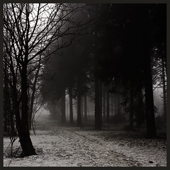 Dark Mist {EXPLORED} (Aqua Libra) Tags: trees mist snow germany dark square deutschland woods explore duitsland sauerland winterberg 500x500 explored soulscapes nordenau photoexplore wwwwinterbergnordenaucom