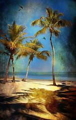 The Moorings Village (dbullens) Tags: ocean texture canon boat palmtree islamorada floridakeys moorings ultimateshot theunforgettablepictures thechallengefactory