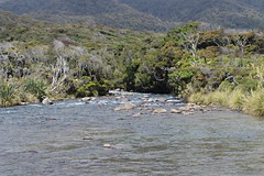 New Zealand Fly Fishing Expeditions (swguiding) Tags: newzealand fly fishing nz southisland otago queenstown guide guides guided fiordland southwestland helifishing newzealandflyfishing flyfishingnewzealand nzflyfishing flyfishingnz queenstownflyfishing flyfishingqueenstown fishingqueenstown queenstownheliflyfishing queenstownhelifishing queenstownfishing helifishingqueenstown heliflyfishingqueenstown heliflyfishingqueenstownnewzealandflyfishing