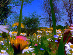 invasione di campo (perplesso42) Tags: flowers campo fiori distillery pasqua happyeaster otw invasione buonapasqua invasionedicampo flickraward platinumpeaceaward coth5 gfeffe bbng