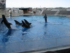 """Oltremare -  27 03 2010_172 (Bludipersia) Tags: italien italy italian flickr italia dolphin themepark riccione delfino delfini themenpark oltrmare acquafan parcàthème parcotematico bludipersia emiliaromagna"""""""