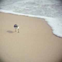 Birdy Hineys Make Me Giggle (Erin Branham) Tags: ocean bird beach 50mmf14 oceancitymd theymakemegiggle birdyhiney ifeelslightlynaughtyforlaughing