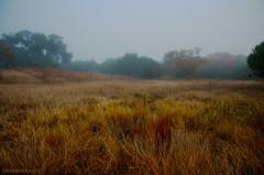 Deep Into November (Don J Schulte) Tags: november mist grass misty fog austin grey texas tx gray driftwood grassland oscote