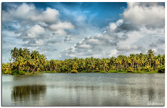 My Village (Sh@dows) Tags: india green canon landscape photography photo shadows kerala coconuttree thrissur keralam shdows sarin canon24105f4isl 450d canon450d thengu sarinsoman gettyimagesindiaq3