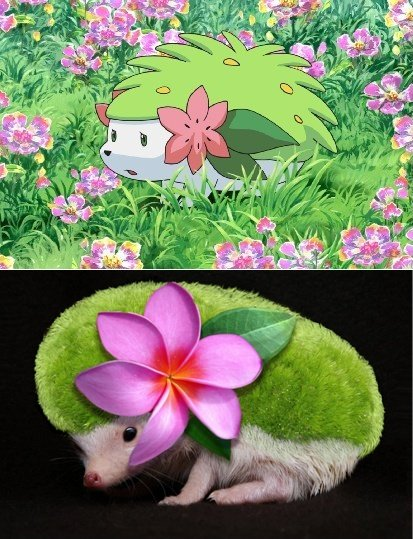 Shaymin real