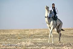 Tuareg rider (Azaga ツ) Tags: life light color canon desert camel libya ابراهيم صحراء 50d ليبيا جمل sebha حياة ibrahem غدامس ghademes طوارق سبها azaga عزاقة