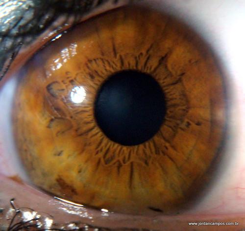 cursos de iridologia en usa