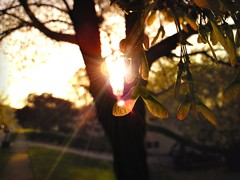 Do you remember when (Riley McGhee) Tags: light macro tree green grass jack leaf do ray remember shine time you bokeh johnson helicopter nostalgia memory when flare fade through distant distancerunner68