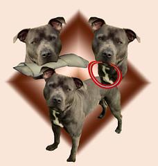 Buster (Taztina) Tags: dogs animals manipulations tina 2010 creations rubystreasures