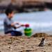 gorrion observa a niño en la playa jugando