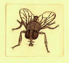 - 001 (tim.spb) Tags: original fly etching postcard small ornament plates desigh    aquafortis