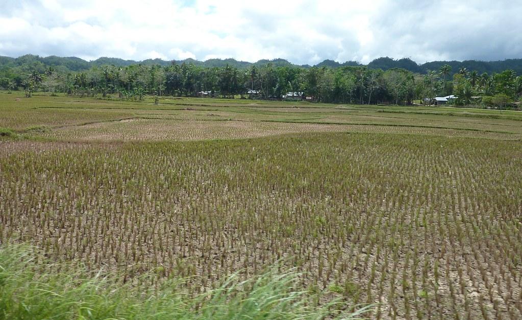 Bohol-Talibon-Chocolate Hills (15)
