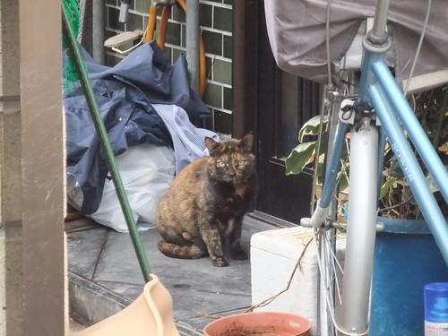 Today's Cat@2010-04-13