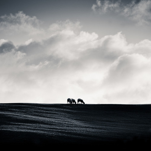 Cuba Gallery: New Zealand / Landscape / black and white / clouds / sky / natural light / sheep / hills / rural / photography