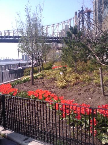 Queensboro Bridge in spring