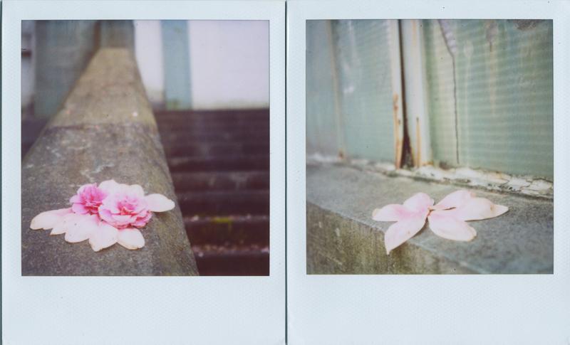 magnolia and camelia