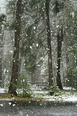 Spring Snow (qorp38) Tags: trees snowflakes spring snowfall forestsnowspring