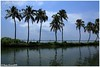 Lakes n cocos (Naseer Ommer) Tags: lake canon coconut palmtrees backwater alleppey naseerommer canoneos5dmarkii discoverplanet dpintl