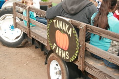 Tanaka Farms Strawberry Tour